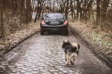 Wenn Herrchen fährt, muss Hundchen hinterher